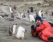 ANTARCTICA: wildlife, icebergs, cruise ship, Antarctic Peninsula