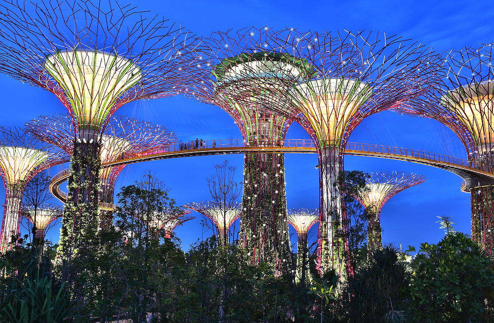 Supertree Grove, Gardens By The Bay | Paul Kennedy ...