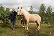 En palomino-farget islandshest, hingsten Harry, som treåring. Gikk med sin første hoppeflokk, 11 dyr, i Stugudal i Tydal sommeren 2004. Oppdretter: An_Magritt Morset, Tydal.