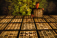 Dr. Terry Erwin's beetle collection from rainforest canopies in Amazonia, Washington, D.C.