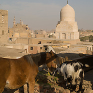 Cairo The horses of historic Cairo EG145A