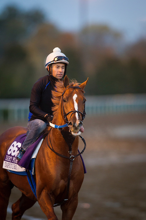 October 29, 2015:  Tapiture, trained by Steven M. Asmussen and owned by Winchell Thoroughbreds LLC, exercises in preparation for the Las Vegas Breeders' Cup Dirt Mile at Keeneland Race Track in Lexington, Kentucky. Alex Evers/ESW/CSM