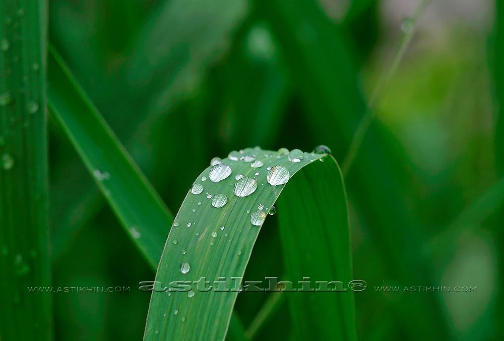 Rain and grass.