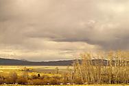 Red Rock Lakes National Wildlife Refuge, Centennial Mountains, Montana, aspen trees