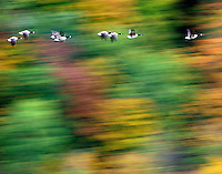 Fall in Vermont, USA