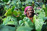 356203-1017 ~ Copyright:  George H. H. Huey ~ Mushroom growing entrepreneur, in his field of anthuriums, deep in the rainforest.  Dominica.  Caribbean