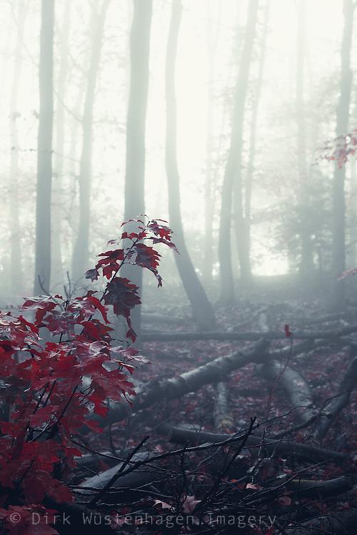Winterwald im Nebel, Wuppertal, Deutschland
