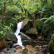 A waterfall along the Ngobe Indian trail in the Cloud Forest near Boquete, Panama.  The trail is still used by the indigenous Panamanians to get from the province of Bocas del Toro to Boquete.