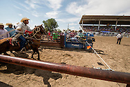 Crow Fair Rodeo, Crow Indian Reservation, Montana, Tie Down Roper, Britt Givens