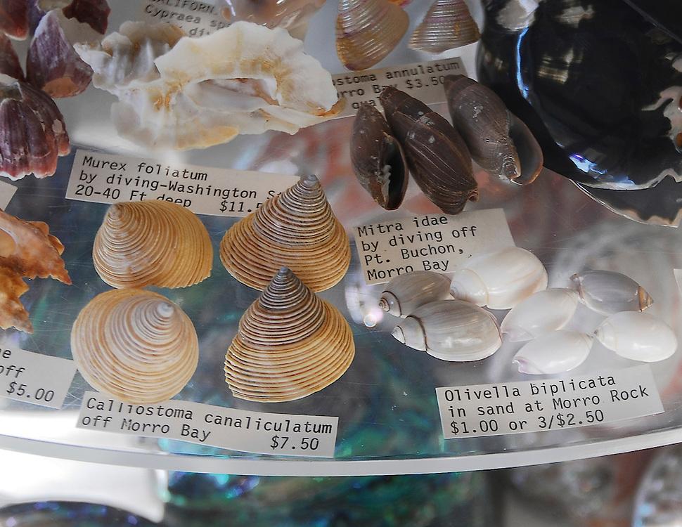 photo by Catherine Herrera, Intl CR Reserved. Contact for License.  photo by Catherine Herrera, Intl CR Reserved. Contact for License.