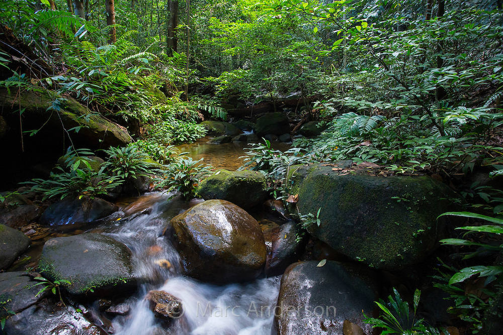 Stream flowing through lush tropical rainforest, Kubah National Park, Sarawak, Malaysia