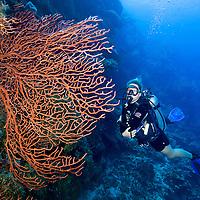 A girl scuba diving on the reef wall around Roatan, Honduras.