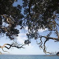 New Zealand, North Island, Leigh, Trees line coastline opposite Goat Island at sunrise on summer morning