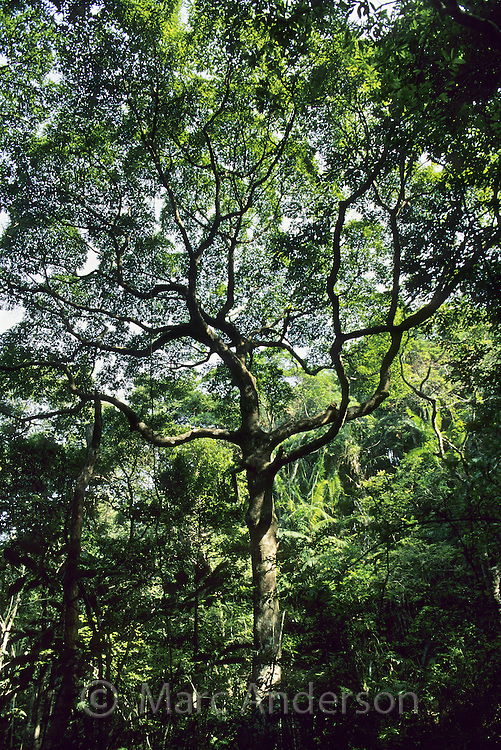 Rainforest trees, Tai Po Kau Nature Reserve, Hong Kong, China.