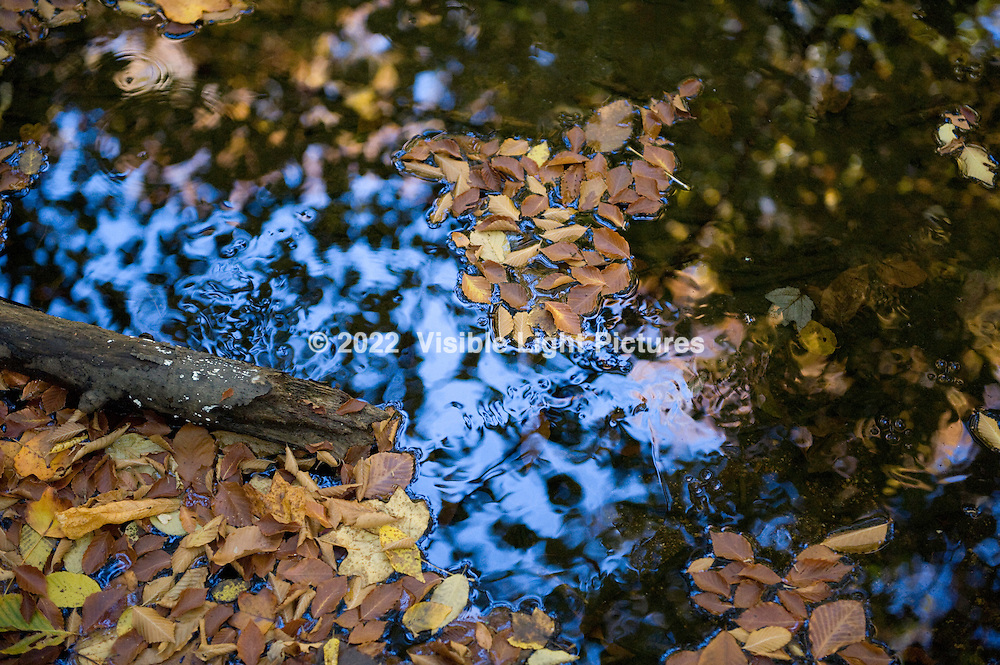 Fall leaves on a forest stream