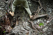 Henry Pedersen climbs the roots of a fallen tree along the West Coast Trail, British Columbia, Canada.