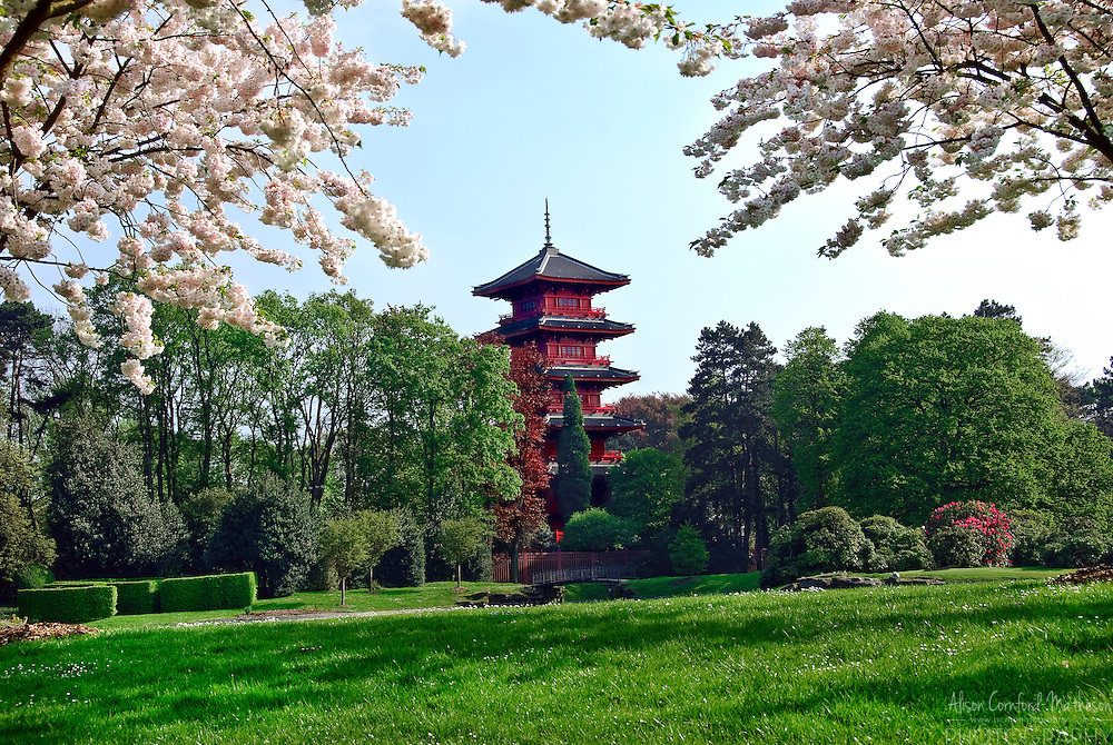 Japanese Tower in Laeken, Brussels is viewed through the cherry blossoms surrounding the Royal Gardens.