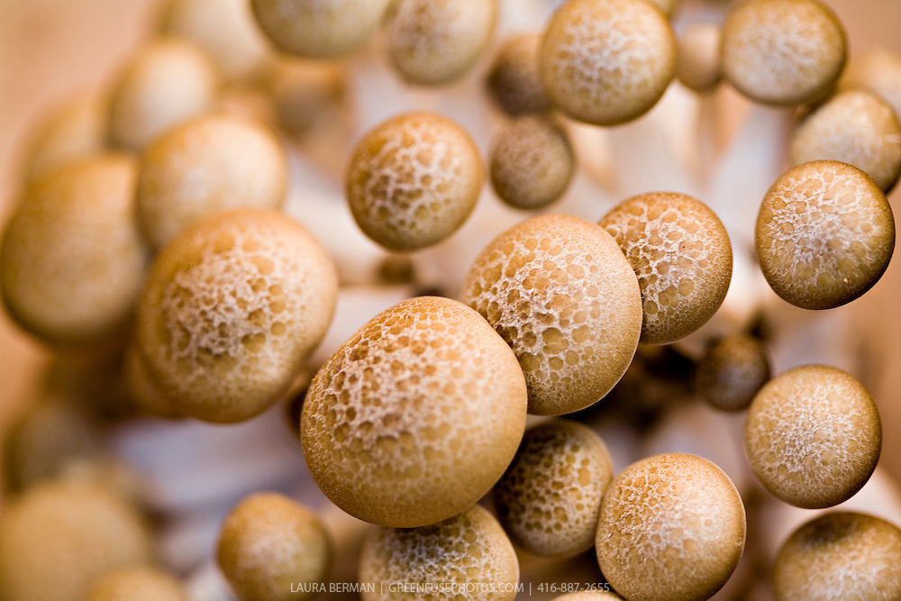 how to grow mushrooms for eating