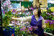 A woman shops for orchids in the Jianguo Flower Market (??????) in Taipei, Taiwan.