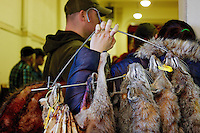 ATHOL, IDAHO - February 22, 2014: A trapper holds a hanger of bobcat pelts that she brought in for auction at the annual East Side Washington Fur Trappers Associations annual fur sale held in Athol Community Center in Athol, Idaho.