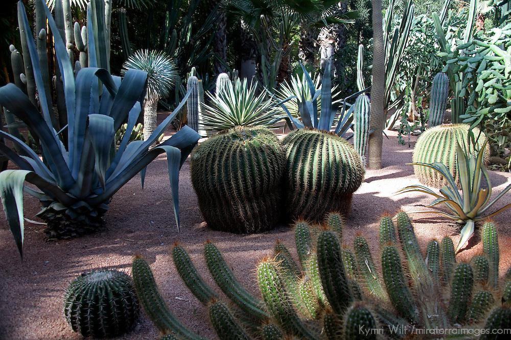 Africa, Morocco, Marrakech. Yves Saint Laurent's Jardin Majorelle provides a colorful artist's landscape.