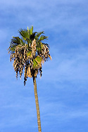 Morning light on palm tree in Los Angeles