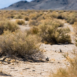 Sand and scrub brush signify the Mojave Desert in eastern California, near the Nevada border.