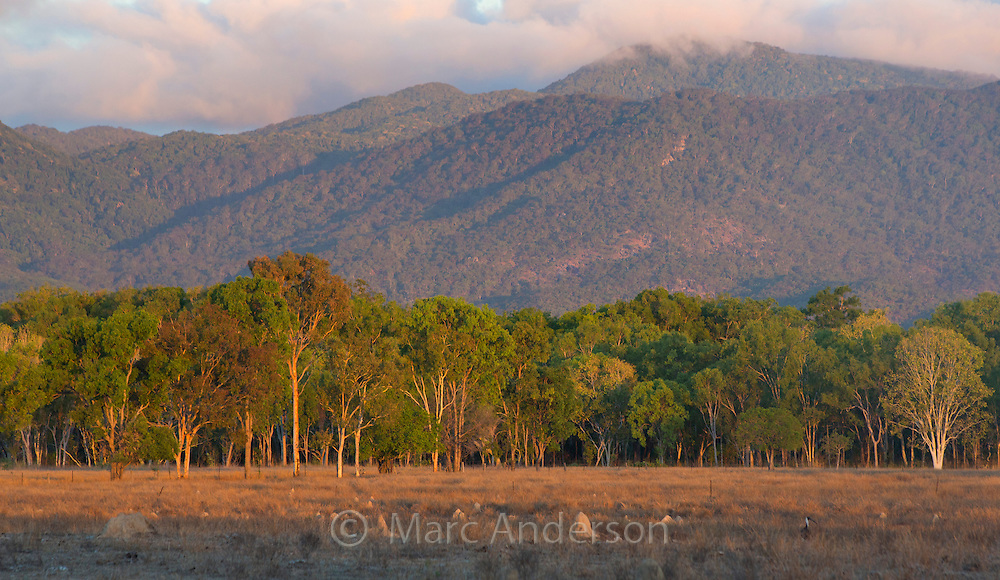Grazing fields with the Mount Carbine tablelands in the background, Queensland, Australia