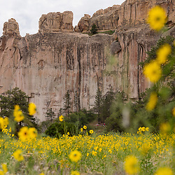 082013       Brian Leddy<br /> El Morro National Monument is surrounded by sunflowers Tuesday morning. In May, a vandal managed to carve an illegal inscription in the famous rock.