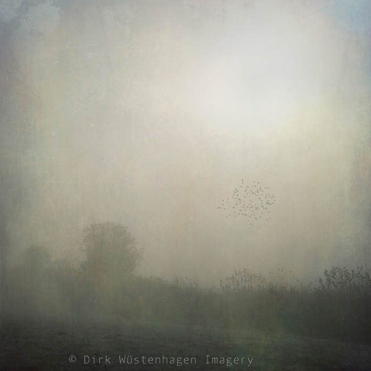 Foggy november morning in rural Wuppertal. There were only some birds around (crows). The sum was fighting to get through the dense fog.
