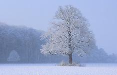 snow, sneeuw, winter wit