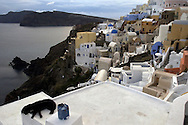 A dog rest on the roof in the town of Ia on the island of Santorini, Greece on October 14, 2002. Photo by Jakub Mosur