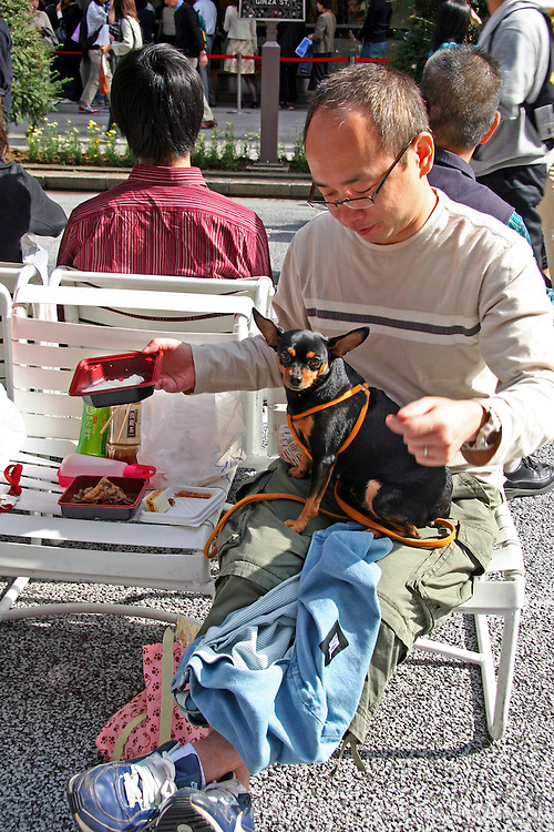 Asia, Japan, Tokyo. Japanese man with spoiled dog on his lap sharing a meal in the Ginza.