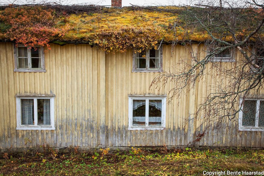 Fraflyttet gårdshus i Tydal, Sør-Trøndelag, med utpreget torvtak.