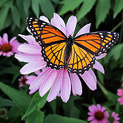 &quot;Stay Lady Stay&quot;<br />