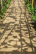 An intriguing graphic pattern of shadows cast on the ground by the timbers of the pergola above and the emerging foliage of the grape vine which they support.<br />