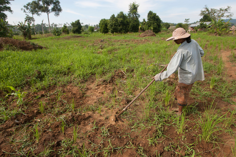 An impoverished Cambodia farmer tends to a field along the Thai-Cambodia border.