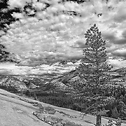 Jeffrey Pine Tenaya Lake Basin - Big Sky Clouds Olmstead Point - Yosemite - HDR - Infrared Black & White