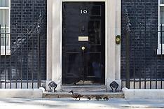 JUL 14 2014  A family of Ducks walk pass Downing Street No10 this morning