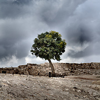 Single Tree on Citadel Hill in Amman, Jordan<br />