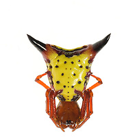 Arrowshaped Micrathena (Micrathena sagittata), South Carolina.
