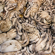 "Snails are sold at the Rialto Pescheria, fish market. Venice (Venezia) is the capital of Italy's Veneto region, named for the ancient Veneti people from the 10th century BC. The romantic ""City of Canals"" stretches across 117 small islands in the marshy Venetian Lagoon along the Adriatic Sea in northeast Italy, Europe. The Republic of Venice wielded major sea power during the Middle Ages, Crusades, and Renaissance. Venice and the Venetian Lagoon are honored on UNESCO's World Heritage List."