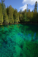 Large Trout can be seen in the crystal clear waters of Kitch-iti-kipi, Michigan's largest freshwater spring. Over 10,000 gallons a minute gush from fissures in the underlying limestone. The flow continues throughout the year at a constant 45 degree Fahrenheit.<br /> <br /> Palms Book State Park,<br /> Michigan's Upper Peninsula