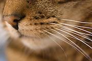 A closeup of a cat's muzzle.