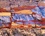 0113-1013 ~ Copyright:  George H. H. Huey ~ Detail view of petrified wood at Blue Mesa.  Petrified Forest National Park, Arizona.