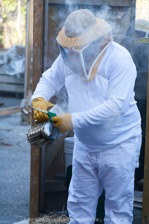 A beekeeper with the Toronto Beekeepers Co-op  prepares a smoker, prior to working with her bees.