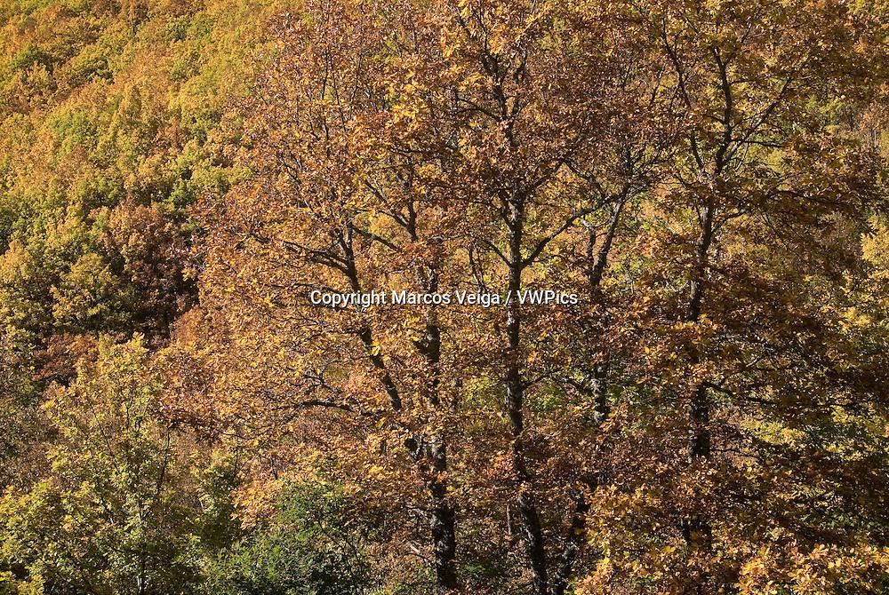 Deciduous forest in autumn, Spain.