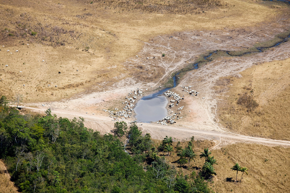 Fazenda Tres Rios (cattle farm) Mato Grosso, Brazil, August 7, 2008. Daniel Beltra/Greenpeace