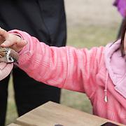 Hornborgasjön - Bird ringing - Ringmerking