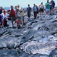 USA, Hawaii, Volcanoes National Park,  Tourists watch molten lava from Kilauea volcano flowing near Chain of Craters Road